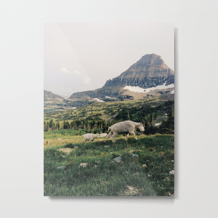 Montana Mountain Goat Family Metal Print