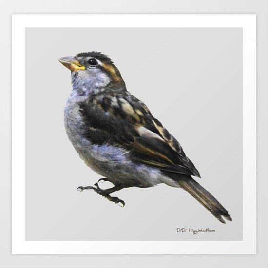 Sweet Little Sparrow Art Print