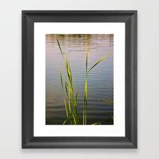 Evening Reeds Framed Art Print