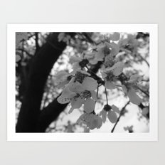 Places in Black & White: Plum Tree 15 Art Print