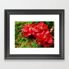 Fallen camellias Framed Art Print