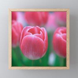 Beautiful Pink Tulips Framed Mini Art Print