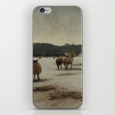 Winter Sheep iPhone & iPod Skin