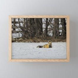 Beautiful Red Fox - No. 3 Framed Mini Art Print