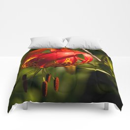 Firery Lily Comforters