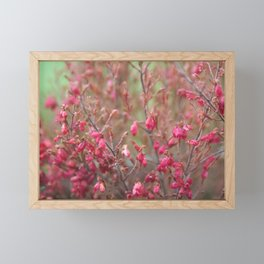 Blooming shrub hot pink flowers Framed Mini Art Print