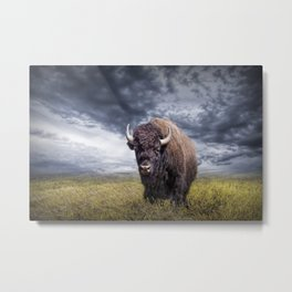 Plains Buffalo on the Prairie Metal Print