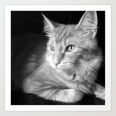 Classic Cat Clementine  Art Print