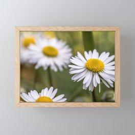 Daisy field Framed Mini Art Print