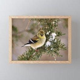 Professor Goldfinch Framed Mini Art Print