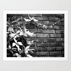 Autumn study, reaching, four. Art Print