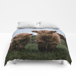 Scottish Highland Cattle Calves - Babies playing II Comforters