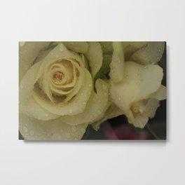 White Riding Rose Metal Print