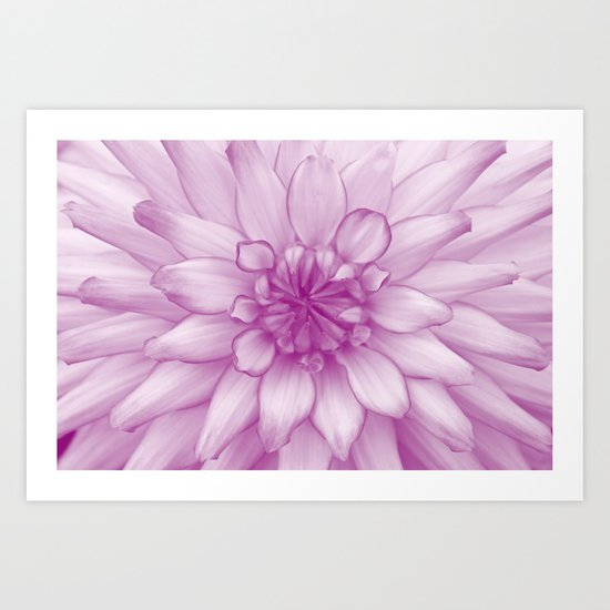 Dahlia Radiant Orchid  - JUSTART © Art Print