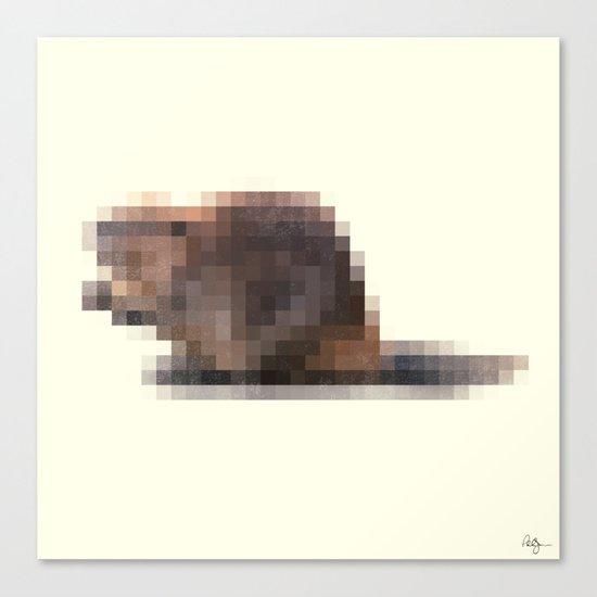 Censored Semi-Aquatic Rodent Canvas Print