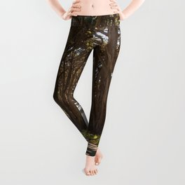 Tunnel of Trees Photography Print Leggings