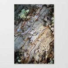 Eaten Wood Canvas Print