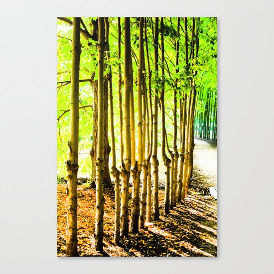 Sun beyond the trunks Canvas Print