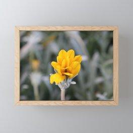 Yellow Flower Close-Up Photo Framed Mini Art Print