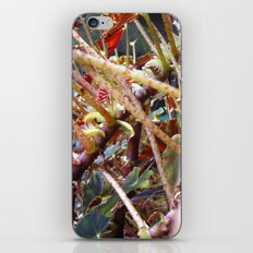 Dragon Fight    [PLANTS]   [VINES] iPhone & iPod Skin