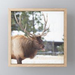 Watercolor Elk Bull 25 Framed Mini Art Print