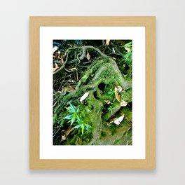 Old Roots Framed Art Print