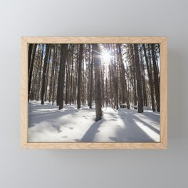 Yellowstone National Park - Lodgepole Forest 2 Framed Mini Art Print