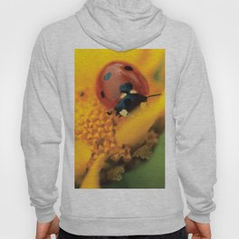 Ladybird, macro photography, still life, fine art, nature photo, romantic wall print Hoody