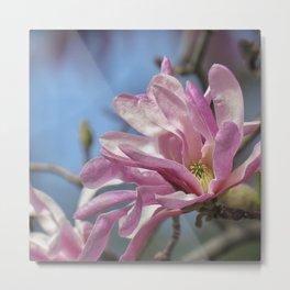 magnolia 02 Metal Print