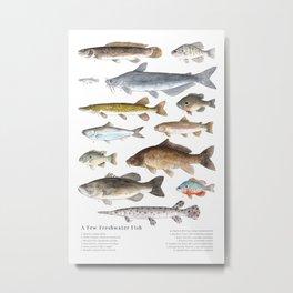 A Few Freshwater Fish Metal Print
