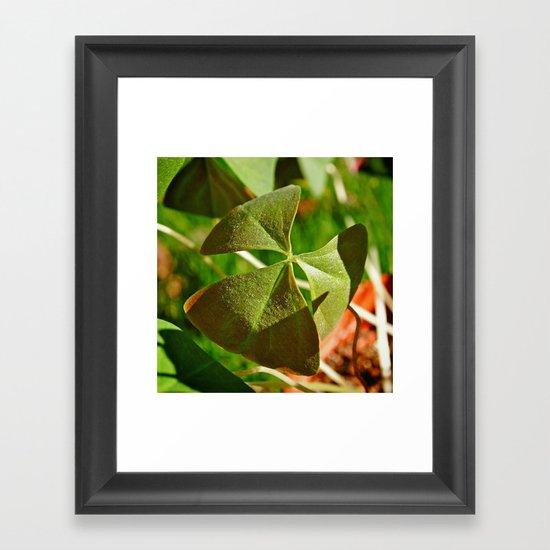 Shamrock closeup Framed Art Print