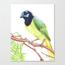 Chara Verde Canvas Print