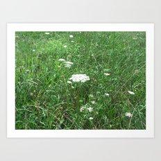 Queen Anne's Lace/field Art Print