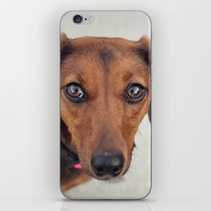 Doxie Dares You  iPhone & iPod Skin
