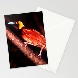 Bird of Paradise Bird In Papua New Guinea Stationery Cards