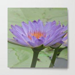 Blue Water Lilies in Hangzhou Metal Print