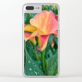 colored calla lily in the garden Clear iPhone Case