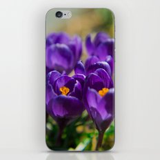 Spring Colors  iPhone & iPod Skin