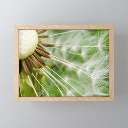 Dandelion Framed Mini Art Print