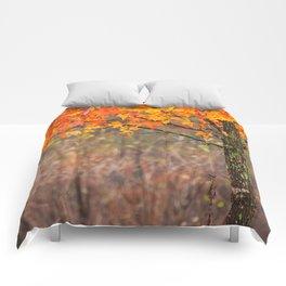 Autumn In Connecticut Comforters