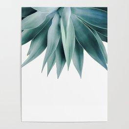 Agave fringe Poster