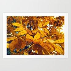 Golden Hickory Art Print
