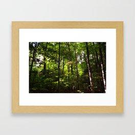 Forest // Silent In The Trees  Framed Art Print