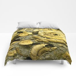 Fossils - Ammonite - Coiled Cephalopods  Comforters