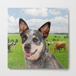 Australian Cattle Dog Blue Metal Print