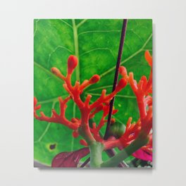 Coral Beauty Metal Print