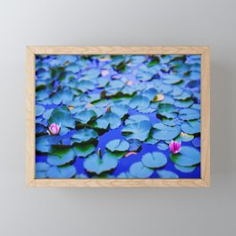 Water lilies in a pond Framed Mini Art Print
