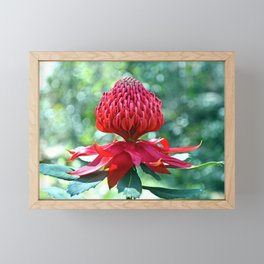 Dancing Waratah Framed Mini Art Print