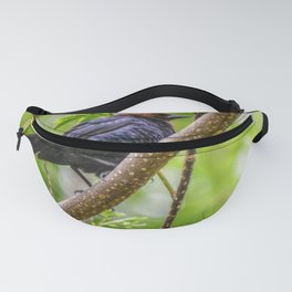 Brown Headed Cowbird Fanny Pack