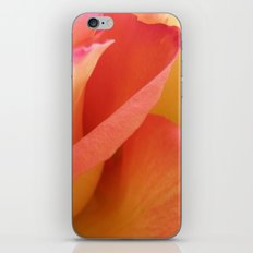 Two-Tone Roses #6 iPhone & iPod Skin